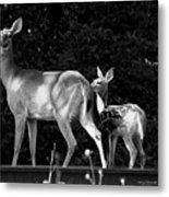 Deer Tracks Metal Print