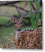 Deer V5 Metal Print