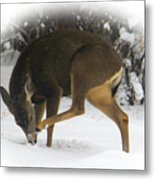 Deer With An Itch Metal Print