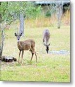 Deer18 Metal Print