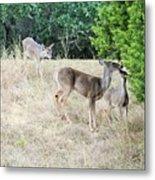 Deer24 Metal Print