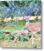 Deer50 Metal Print
