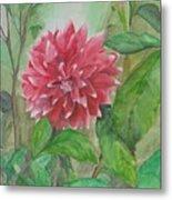 Dahlia Flower Grown In Apartment Garden Metal Print