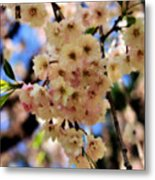 Delicate Blossoms Metal Print