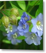 Delicate Blues Metal Print