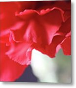 Delicate Carnation  Metal Print