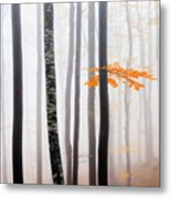 Delicate Forest Metal Print