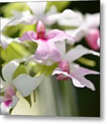 Delicate Orchids By Sharon Cummings Metal Print