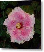 Delicate Pink Flower Metal Print