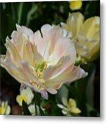Delicate Pink Tulip 2 Metal Print