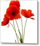 Delicate Red Poppies Vector Metal Print