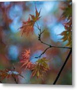 Delicate Signs Of Autumn Metal Print