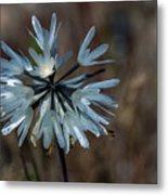 Delicate Silver Wildflower Metal Print