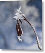 Delicate Winter Metal Print