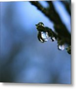 Delighted By Droplets Metal Print