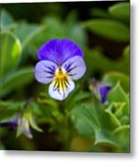 Delightful Colors Metal Print