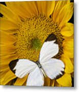 Delightful White Butterfly Metal Print
