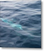 Delphin 1 The Mermaid Metal Print