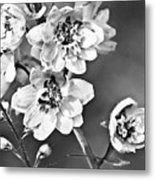 Delphinium Black And White Metal Print