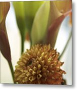 Denmark Close Up Brown Dahlia Metal Print
