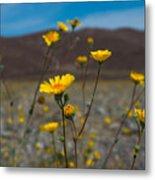 Desert Blooms Metal Print