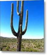 Desert Cactus 3 Metal Print