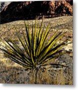 Desert Cactus Metal Print