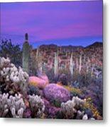 Desert Garden Metal Print by Eric Foltz