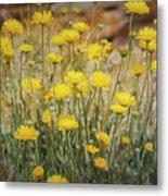 Desert Marigold Bouquet  Metal Print