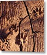 Desert Paw Prints Metal Print