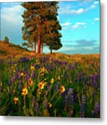 Desert Pines Meadow Metal Print