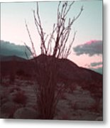 Desert Plant And Sunset Metal Print