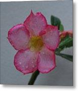 Desert Rose On White Metal Print