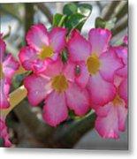 Desert Rose Or Chuanchom Dthb2105 Metal Print