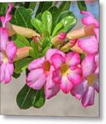 Desert Rose Or Chuanchom Dthb2106 Metal Print