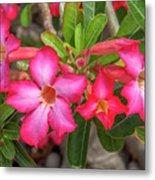 Desert Rose Or Chuanchom Dthb2108 Metal Print