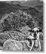 Desert Sheep Metal Print