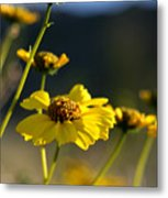 Desert Sunflower Metal Print