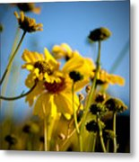 Desert Sunflower Variations Metal Print