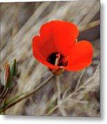 Desert Wildflower Metal Print