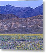 Desert Wildflowers, Death Valley Metal Print