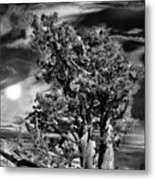 Deserted Tree Metal Print
