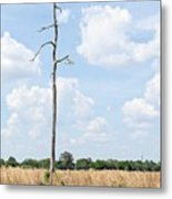 Desolate Tree Metal Print