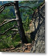 Detail Of A Pine On The Edge Of A Rock Metal Print