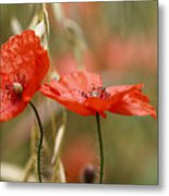 Detail Of The Corn Poppy Metal Print