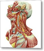 Detailed Dissection View Of Human Neck Metal Print
