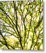 Detailed Tree Branches 1 Metal Print