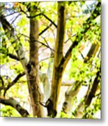 Detailed Tree Branches 2 Metal Print