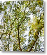 Detailed Tree Branches 5 Metal Print