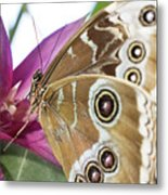 Detailed Wings Metal Print